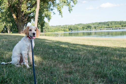 dog-friendly activities - des moines, ia